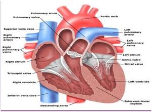 jantung-skema