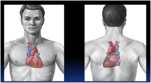 onomatopoeia-jantung